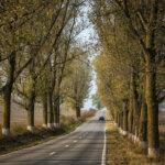 Drumuri Dobrogea