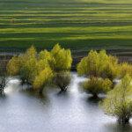 Primăvara Dobrogea